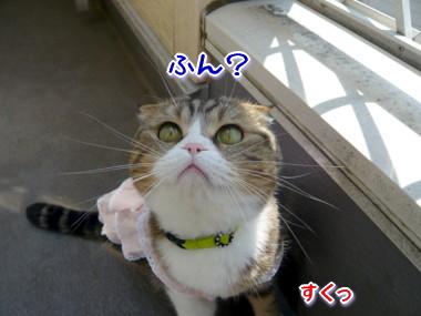 おしゃれ2.jpg