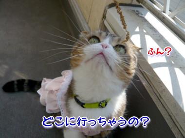 おしゃれ4.jpg