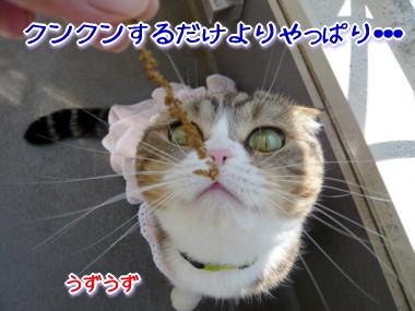 おしゃれ7.jpg