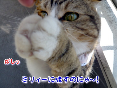 おしゃれ8.jpg