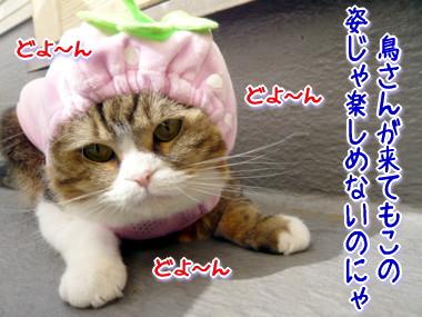 帽子7.jpg