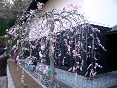 東慶寺.jpg