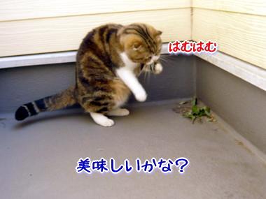 葉っぱ13.jpg