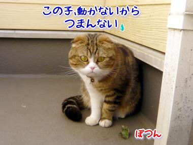 葉っぱ3.jpg