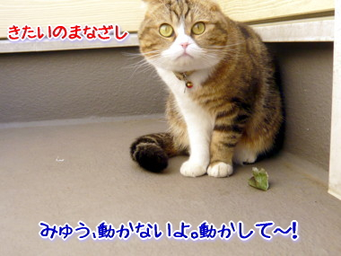 葉っぱ4.jpg