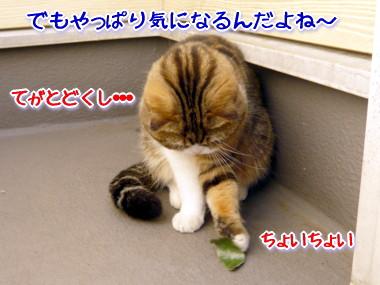 葉っぱ6.jpg