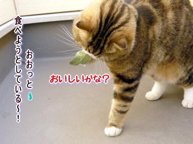 葉っぱ8.jpg