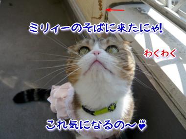 おしゃれ3.jpg