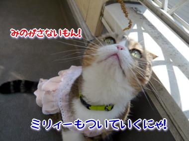 おしゃれ5.jpg
