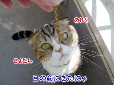 おしゃれ6.jpg