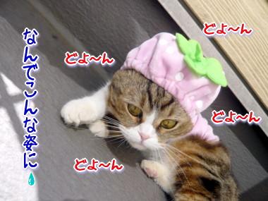 帽子10.jpg